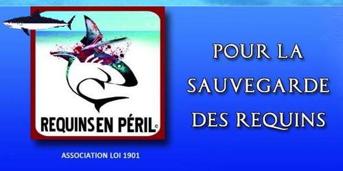 854,Requins-en-peril