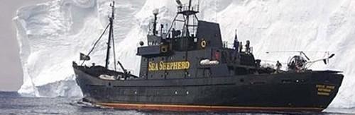678,Sea-Shepherd