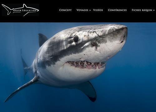 905,Shark-Education