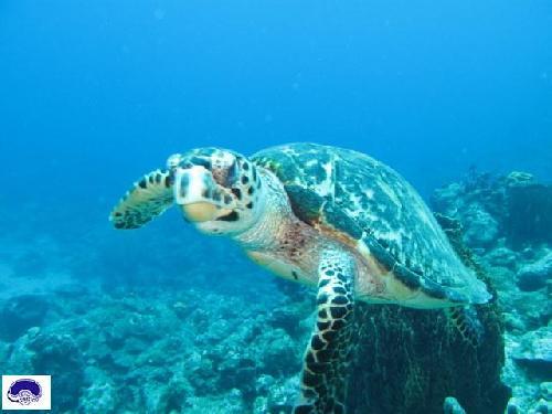 663,tortue-marine