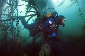 73,kelp