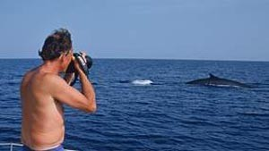 496,whale-watching